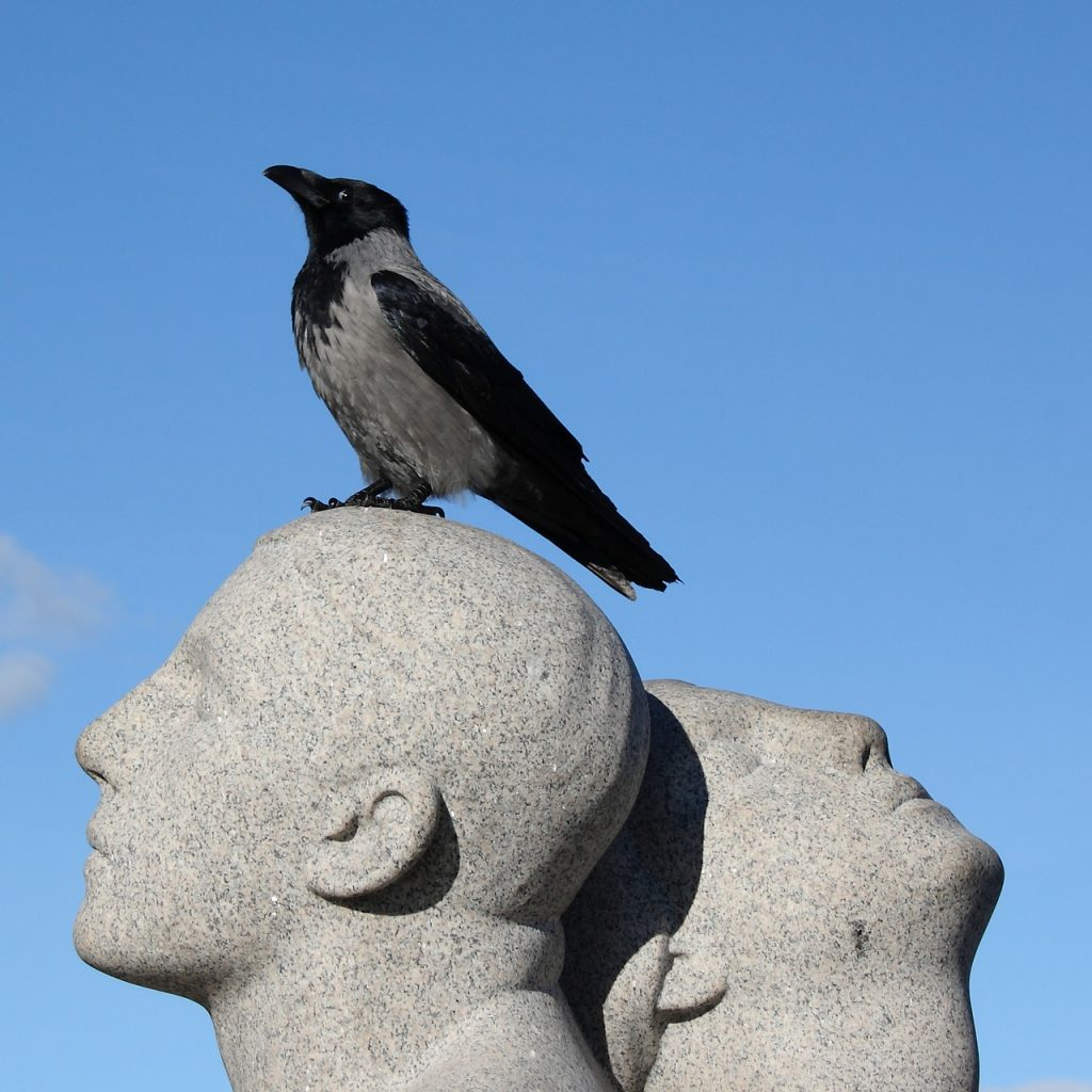 Bird in Frogner Park