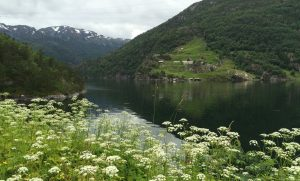 A Fjord Norway Road Trip